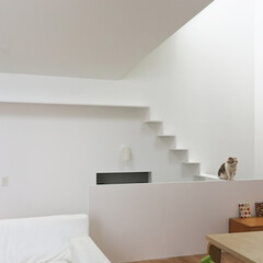 建築/住まい/シンプル住宅/不動産・住宅/注文住宅/建築家と作る家/... リビング壁のキャットウオークを楽しむ猫た…