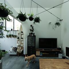 建築/住まい/狭小住宅/ペットと住む家/犬と住む家/シンプル住宅 犬も飼いやすいモルタル床のリビング
