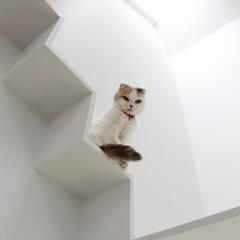 建築/住まい/猫と住む家/猫と暮らす家/キャットウオーク/建築家と建てる家/... お気に入りの階段