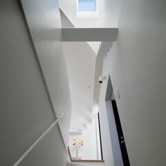 建築/住まい/猫と住む家/デザイン住宅/建築家住宅/OUCHI-40/... 猫のキャットウオーク・石川淳建築設計事務…