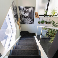 建築/住まい/猫と住む家/ペットと住む家/狭小住宅 階段見下ろし  猫のポスターはお施主様が…