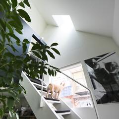 建築/住まい/狭小住宅/ペットと住む家/犬と住む家/犬と暮らす家/... 犬が外を見られる窓  近隣の住民さんに大…