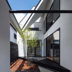 建築/住まい/建築デザイン/注文住宅/シンプル住宅 中庭の様子 左が南方向で右の窓がリビング…