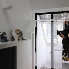 建築/住まい/ペット住む家/猫と住む家 猫と暮らす二世帯住宅が雑誌取材を受けまし…