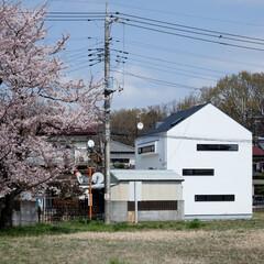 建築/住まい/シンプル住宅/注文住宅/建築デザイン 桜の木を借景  OUCHI-19
