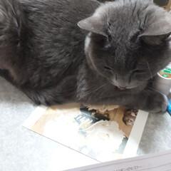 猫/おうち 我が家の自慢‼️裁縫をしようと思うと…お…