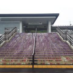 旅行 お初‼️足利市フラワーパーク駅 階段が大…