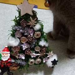 クリスマス/ダイソー/ハンドメイド/DIY クリスマスツリー🎄作ってみました‼️ が…(1枚目)