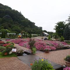 旅行 足利フラワーパーク‼️ 今日は栃木県民の…