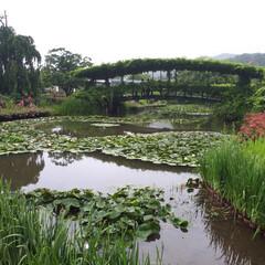 旅行 足利フラワーパーク‼️ 今日は栃木県民の…(2枚目)