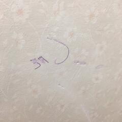 落書き/ポールペン消し/壁紙 壁紙の落書き消しなら、ガンジーのポールペ…(2枚目)