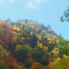 紅葉/紅葉スポット/秋/おでかけ 照葉峡の紅葉 色合が美しい 秋を満喫した…