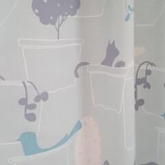小鳥/猫/カーテン/こども部屋 こども部屋のカーテンです。 やわらかいブ…