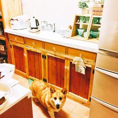 コーギー/キッチンタイル/キッチンカウンター/ペット/犬/DIY/... 熊本地震で壊れてしまた食器棚を処分して、…
