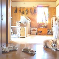 壁板/ままごとキッチン/犬/セルフリノベーション/和室/リフォーム/... 7年前の和室(1枚目)