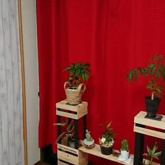 100均DIY/観葉植物/フォロー大歓迎/冬/おうち/ハンドメイド/... 模様替えしたリビングの一角です😌💓 風水…