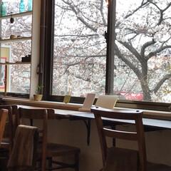お花見/お散歩/カフェ巡り/カフェ/桜/おでかけ/... のんびりお散歩しながらお花見。そして桜を…