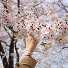 春色アクセサリー/腕時計/ダニエルウェリントン/新生活/雑貨/おでかけ/... 昨日までの気候が打って変わり、関東は雪が…