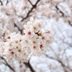 春色アクセサリー/腕時計/ダニエルウェリントン/新生活/雑貨/おでかけ/... 昨日までの気候が打って変わり、関東は雪が…(2枚目)