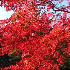 不動滝/紅葉狩り/おでかけ/風景/旅行 車で5分の場所へ  みんなで紅葉狩りへ …(4枚目)