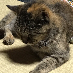 大好き(⑉• •⑉)❤︎/ゆっくり休んでね/今までありがとう/愛猫/ペット 愛猫  あなたがまだ野良猫で娘がまだ2歳…(8枚目)