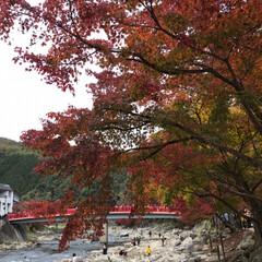 旅行/秋/風景/おでかけ/旅 香嵐渓   賑やかだったよ    寒くて…