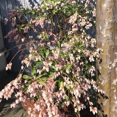 LIMIAおでかけ部/風景/春の一枚
