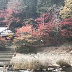 旅行/秋/風景/おでかけ/旅 香嵐渓へ(2枚目)