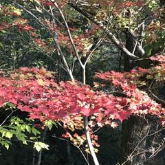 紅葉/散歩/秋/風景