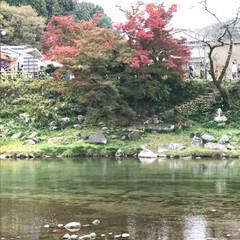 旅行/秋/風景/おでかけ/旅 香嵐渓   賑やかだったよ    寒くて…(3枚目)
