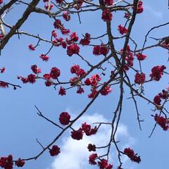 夫婦 鴨/花桃/梅の花/LIMIAおでかけ部/おでかけ/風景/... 節分草が咲いているお寺さんPart3  …