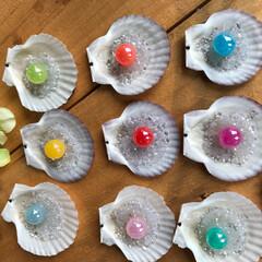 beads/貝殻/雑貨/100均/インテリア/ハンドメイド 貝殻でインテリア雑貨