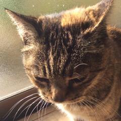 大好き(⑉• •⑉)❤︎/ゆっくり休んでね/今までありがとう/愛猫/ペット 愛猫  あなたがまだ野良猫で娘がまだ2歳…(2枚目)