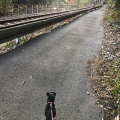 散歩/ペット/犬 ฅ՞•ﻌ•՞ฅワン♥散歩コース  線路沿…