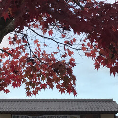 旅行/秋/風景/おでかけ/旅 どんぐりの湯(5枚目)