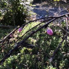 蓑虫/散歩/LIMIAおでかけ部/風景/春の一枚 ミノムシがいた