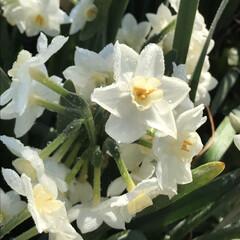 散歩/LIMIAおでかけ部/風景/春の一枚 霜が下りたからキラキラ॑⸜(* ॑꒳ ॑…