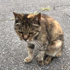 大好き(⑉• •⑉)❤︎/ゆっくり休んでね/今までありがとう/愛猫/ペット 愛猫  あなたがまだ野良猫で娘がまだ2歳…(9枚目)