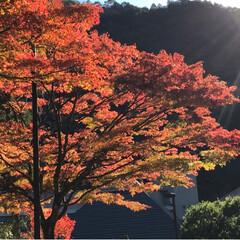 不動滝/紅葉狩り/おでかけ/風景/旅行 車で5分の場所へ  みんなで紅葉狩りへ …(3枚目)