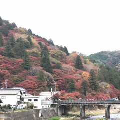 旅行/秋/風景/おでかけ/旅 香嵐渓   賑やかだったよ    寒くて…(4枚目)