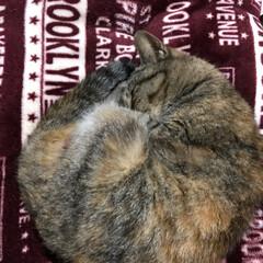 大好き(⑉• •⑉)❤︎/ゆっくり休んでね/今までありがとう/愛猫/ペット 愛猫  あなたがまだ野良猫で娘がまだ2歳…(3枚目)