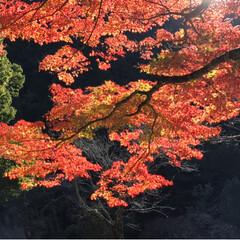不動滝/紅葉狩り/おでかけ/風景/旅行 車で5分の場所へ  みんなで紅葉狩りへ …