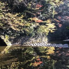 水面鏡/紅葉狩り/秋/風景 紅葉をみに行ってきました   まだ早かっ…