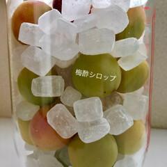 手作り/甘酢漬け/シロップ作り/新生姜/梅 久々の長い休み 色々漬ける季節♪