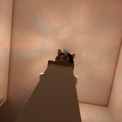 後光/ステンドグラス/階段手摺/ペット ステンドグラス後光ねこ