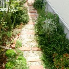 レンガ/ガーデニング/DIY/お庭/砂利/小道/... こちらのミニスペースすべてDIYです。レ…