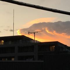 犬/雲/夕焼け/空 伏せをした大きなワンコのような雲でした。