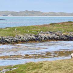 海/旅行/羊/スコットランド 日本語でも緑と青をごっちゃにすることがあ…