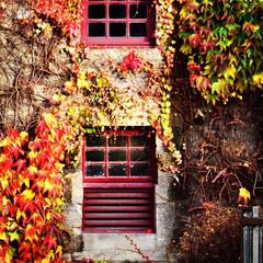 旅の思い出/窓/ウイスキー/秋/紅葉/蔦/... これもピトロッホリのブレアアソール蒸留所…