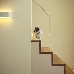 階段 ネコの遊び場